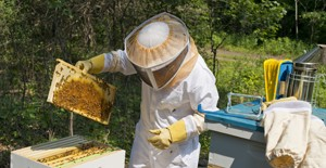 Beekeeping-Supplies